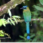 Motmot, manuel antonio costa rica, national park, spa, massage retreat