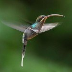 hummingbird, rainforest, retreat, bird watching, national park, costa rica