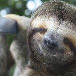 Sloth, manuel antonio costa rica spa massge yoga honeymoon