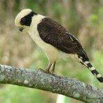 falson, manuel antonio national park bird watching retreat beach nature adventure
