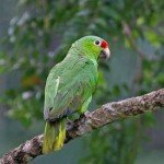 Parrot, prana rainforest retreat, manuel antonio, costa rica, yoga, massage