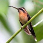 Hummingbird, prana rainforest retreat, manuel antonio, costa rica, vacation, gay friendly