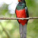 Trogan, prana rainforest retreat, costa rica