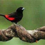 bird watching costa rica manuel antonio