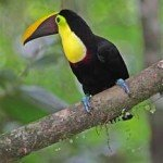 Toucan, prana rainforest retreat, massage, spa, yoga