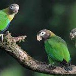 parrot, manuel antonio costa rica, prana rainforest retreat, massage yoga vacation